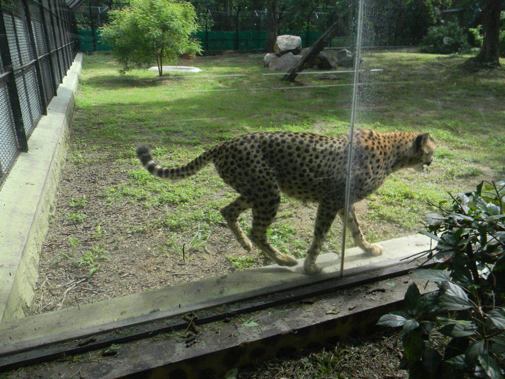 Zoo park, Hyderabad